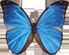 butterfly_189